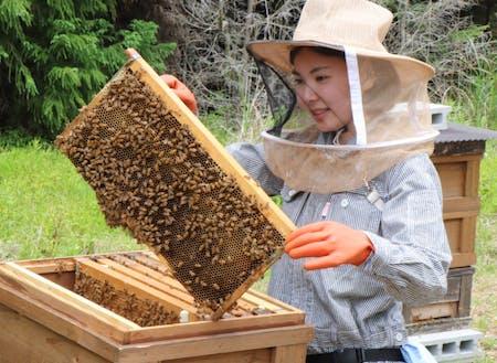 養蜂で町おこし