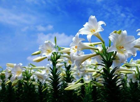 地上には花々が咲き誇る(提供:和泊町)